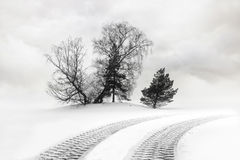 Tire tracks in snow Stock Photography