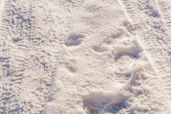 Tire tracks on a snow Stock Image