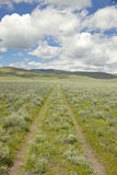 Tire tracks through spring flowers of Centennial Valley near Lakeview, MT Royalty Free Stock Photos