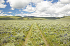 Tire tracks through spring flowers of Centennial Valley near Lakeview, MT Royalty Free Stock Image
