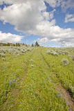 Tire tracks through spring flowers of Centennial Valley near Lakeview, MT Stock Image