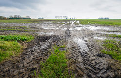Tire tracks in a wet field Royalty Free Stock Photo