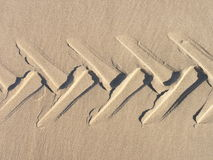 Tire tread in sand Stock Photography