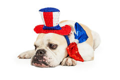 Tired American Patriotic Bulldog Stock Image