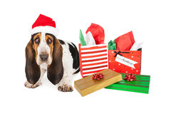 Tired Basset Santa With Gifts. A tired Basset Hound puppy dog with bloodshot eyes sitting next to Christmas presents stock image