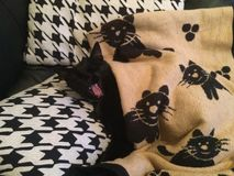 Tired Black Cat. Cute black cat yawning snuggled under a blanket Stock Images