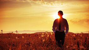 Tired businessman walking among the corn ears Royalty Free Stock Photo
