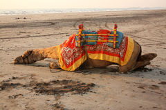 Tired Camel. A tired camel meant for rides sleeps on the sands of a beach at sunset, in India Royalty Free Stock Photography
