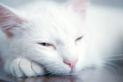 Tired cat. Cat who is tired and rests Royalty Free Stock Image