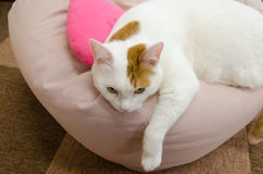 Tired cat. Adorable young cat laying on a pillow Stock Photography