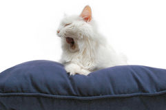 Tired cat on cushion 2 stock photo