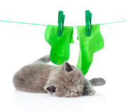Tired cat near socks on the rope for drying. isolated on white Stock Images