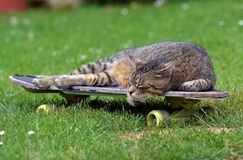 Tired cat on a skateboard Royalty Free Stock Images
