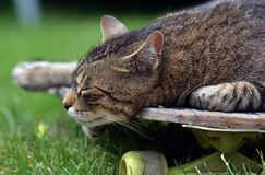Tired cat on a skateboard Stock Image