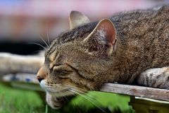 Tired cat on a skateboard Royalty Free Stock Photos