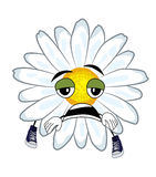 Tired chamomile flower cartoon Stock Photo