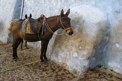 Tired, colorful donkey on Santorini, Greece Royalty Free Stock Images