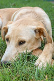 Tired Dog Stock Photos