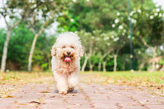 Tired dog with long tongue resting after exercise at park Stock Image