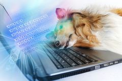 Tired dog by notebook stock photo