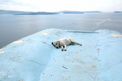 Tired dog on a rooftop on hot summer day royalty free stock photo