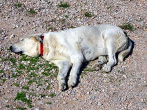 Tired dog sleeping. Dog sleeping on the ground Stock Photo