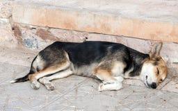 Tired dog sleeping on the sidewalk Stock Images