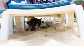 Tired dog is sleeping under a chaise longue. Thailand royalty free stock photography