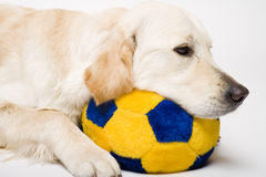 Tired doggy Royalty Free Stock Photo