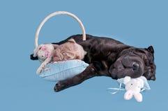 Tired dogs asleep Stock Photos
