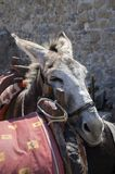 Tired donkey leans his head on the other saddled donkey, touristic attraction, Lindos town. Greek island Rhodos royalty free stock images