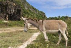 Tired donkey near road Royalty Free Stock Image