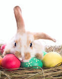 Tired easter bunny Stock Photo