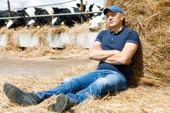 Tired farmer on holiday at a farm among cows sitting on ground. Tired farmer on holiday at a farm among cows sitting on the ground royalty free stock photo