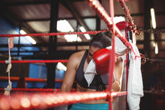 Tired female boxer sitting in the ring Stock Photos