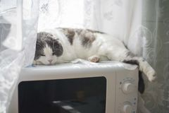 A tired funny cat lies on the belly on the microwave in the kitchen. A tired cat lies on the belly on the microwave in the kitchen Royalty Free Stock Photography
