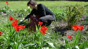 Tired gardener woman weeding flower bed in spring. Tired gardener woman weeding flower bed between red beautiful tulip flowers in hot spring day stock footage
