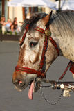 Tired horse Stock Photography