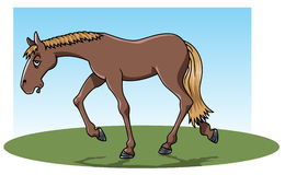 Tired horse. Cartoon-style illustration: a very tired brown horse walking on the grass Stock Photography