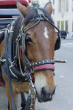 Tired horse in the Central Park. Photo of tired horse after hard work day in the Central Park, New York, USA Stock Images