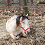 Tired horse Stock Images