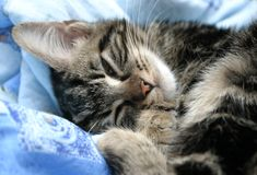 Tired Kitten royalty free stock photos