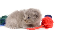Tired kitten and ball of yarn Stock Photography
