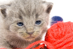 Tired kitten and ball of yarn Royalty Free Stock Photo