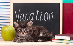 Tired kitten. With school accessories waits for vacation royalty free stock image