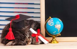 Tired kitten. With school accessories waits for vacation Stock Photo