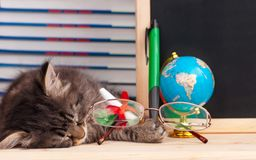 Tired kitten Royalty Free Stock Images