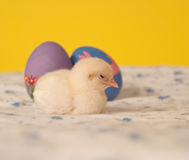 Tired little Easter chick sleeping Stock Images