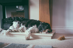 Tired old dog Stock Photography