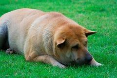 Tired ou deprimido Fotografia de Stock Royalty Free